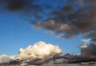 Photo: Fåglar och moln