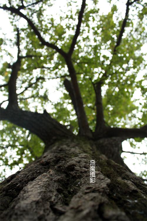 china_green_02