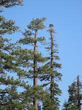 Photo: The Osprey nest