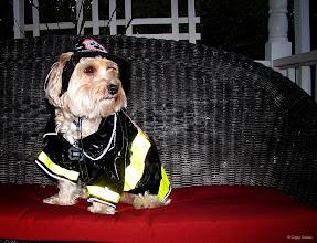 Photo: October 31, 2012 - Firedog #creative366project curated by +Jeff Matsuya and +Takahiro Yamamoto #under5k +Creative 366 Project #pets #dogphotography #googledogpark +The G+ DogPark