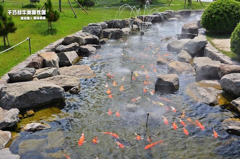 千巧谷牛樂園牧場鯉魚池