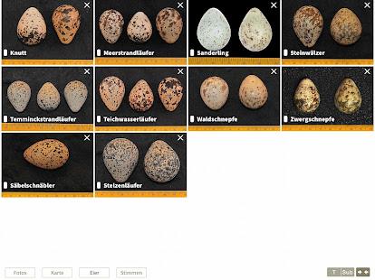 App NABU Vogelwelt - Vögel Entdecken und Bestimmen APK for Windows Phone