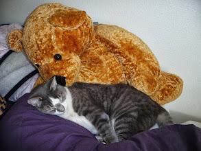 Photo: Bhima and the Bear