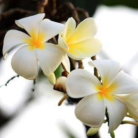 Leelawadee by Pom Wanchart - Nature Up Close Flowers - 2011-2013