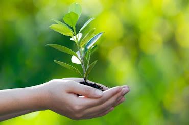 Thay vì nhanh chóng mất đi các khách ghé thăm, hãy thiết kế một lộ trình nuôi dưỡng khách hàng tiềm năng để dần biến họ thành khách hàng trung thành.