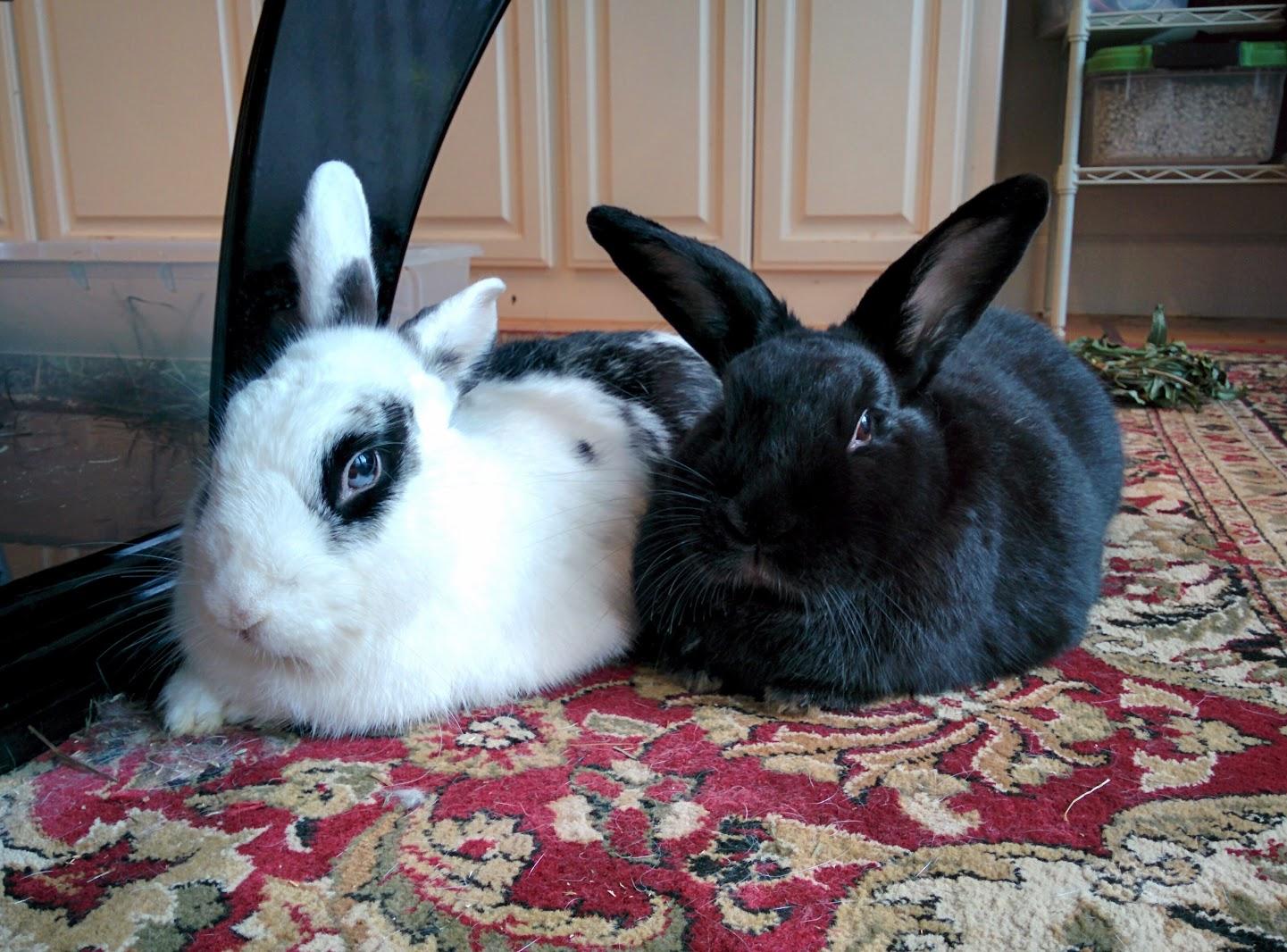 Bao Bao and Luna relaxing