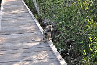 Photo: CAMP LEAKEY macaco con cucciolo