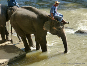Photo: Taking the elephants for a dip in the river.