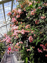 Photo: Bougainvillia! My Dad used to have one of these growing in our back yard in California for a time. (He saw it growing at a Del Mar hotel and liked it.) It was like stumbling across an old friend.