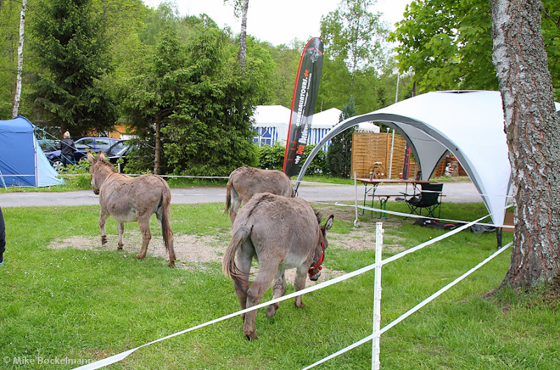 Photo: Mehr in unserem Blogartikel http://eulenburg-camping.blogspot.de/2012/06/ideal-fur-harz-erlebnisurlaub.html