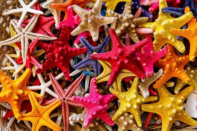 Le stelle sono tante di E l i s a E n n E