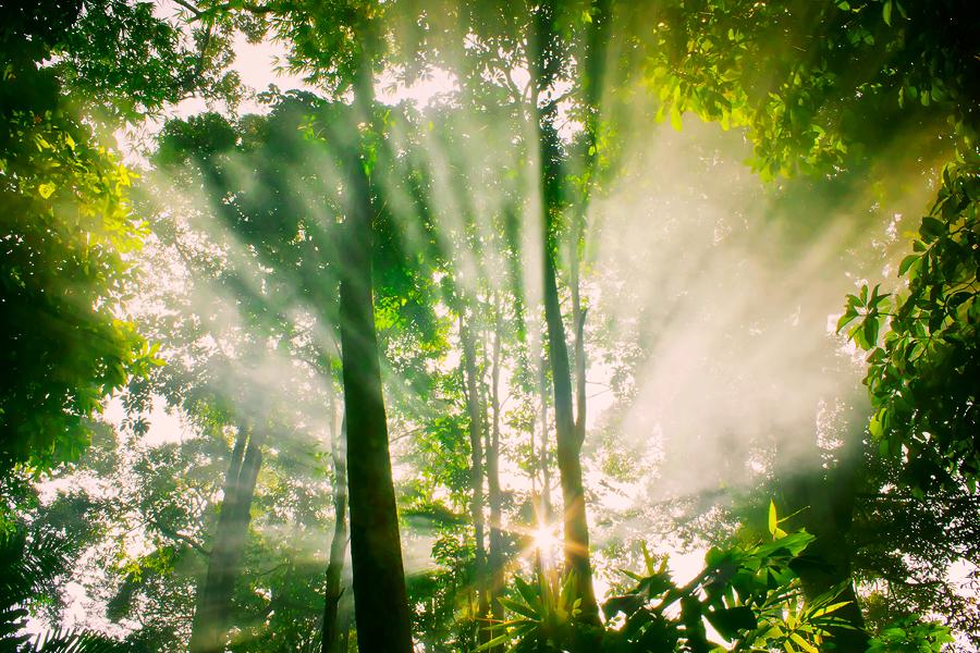 by ZuBer ALi - Landscapes Forests