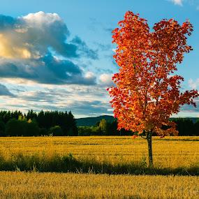 Fall by Bjørn Kristiansen - Landscapes Prairies, Meadows & Fields