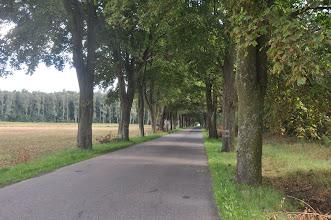 Photo: Piękne szpalery drzew na drodze do Parczewa