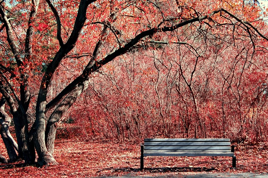 A place to think. by Beata Young - City,  Street & Park  City Parks ( red, tree, park, bench, autumn, falltime, quiet, relaxing, leaves )