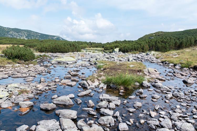 Câlcescu, pârâul emergent, foto Marius