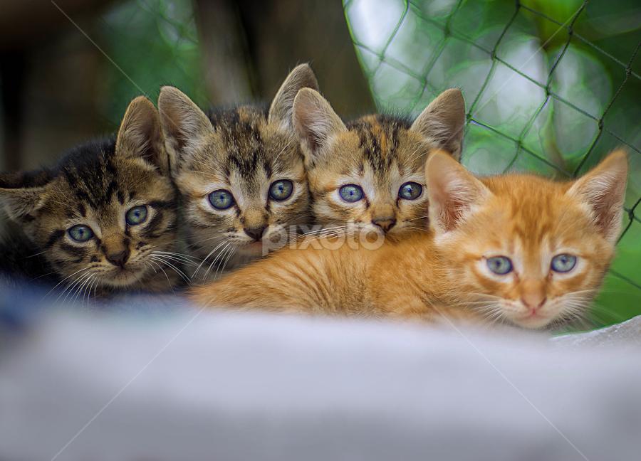 Kitten Eyes by Kriswanto Ginting's - Animals - Cats Kittens ( nikon, kitten, cat, nikon d7100, kitty )