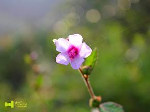 Photo: Thavaseelan