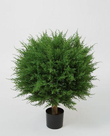 Cupressus Ball Tree (Cypress) - 73cm