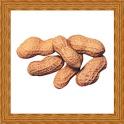 Peanut Gallery icon