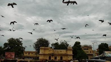 Photo: Tauben werden gut behandelt in Indien