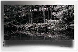 Foto: 2012 01 30 - R 11 09 09 023 - P 153 - am Teich