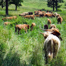 Photo: The Fold in some thick diverse pasture...