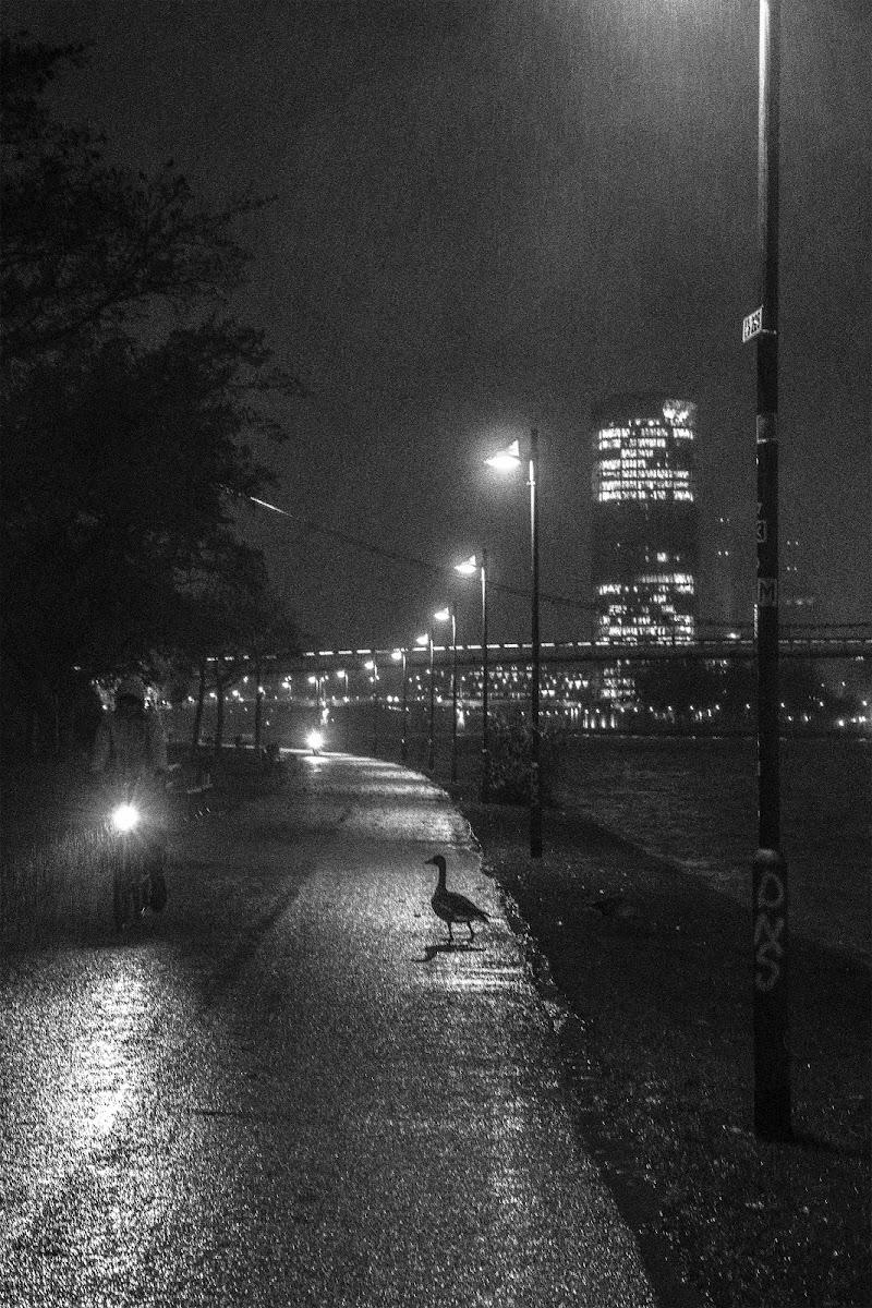 La bizzarra passeggiatrice sola sotto la pioggia di TzukiMidori