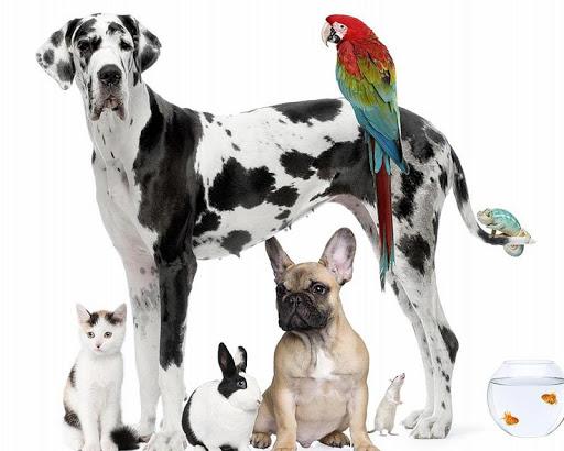 玩解謎App|大丹犬拼图免費|APP試玩