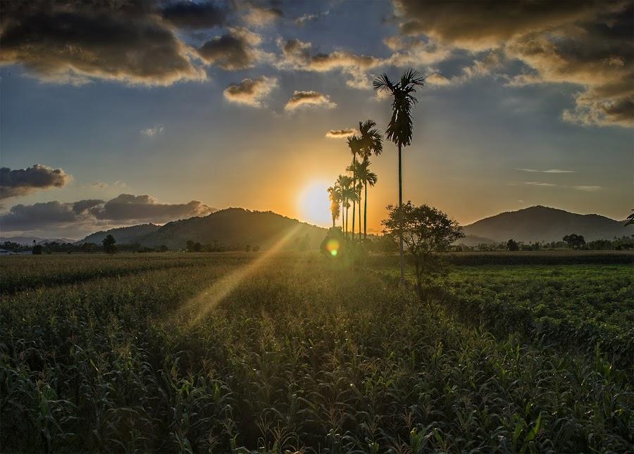 Senja di Ladang Jagung by Gema Saptono - Landscapes Sunsets & Sunrises
