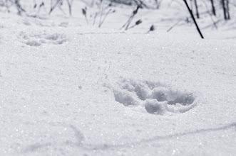 Photo: Fresh snow, fresh tracks
