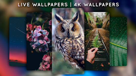 Live Wallpapers - 4K Wallpapers Screenshot