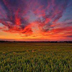 English Barley Field Sunset by Jamie Link - Landscapes Prairies, Meadows & Fields