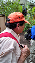 Photo: Day 3: Mariposas de Mindo, a butterfly landed on Dr. V's hat, just chillin.