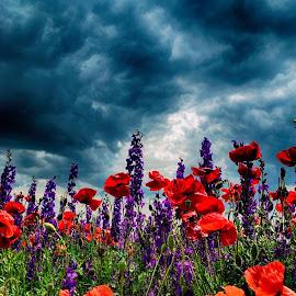 by Dr. Abhijit Mahanta - Flowers Flower Gardens