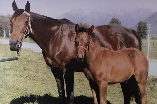 Se fue uno de los mejores vientres del Paso Nevado: a los 29 años murió Weekend Leave, madre del crack We Can Seek