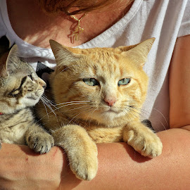Can I tell you a story? by Ciprian Apetrei - Animals - Cats Portraits ( cats, portraits, animals, brittany, pair )