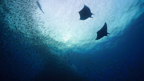Costa Rica - Shark Defenders thumbnail