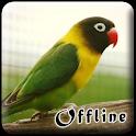 Masteran Lovebird Kusumo Offline icon