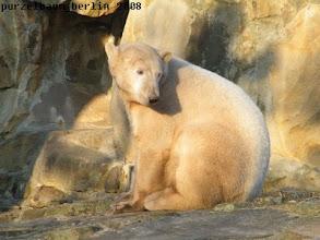 Photo: Eisbaerchen Knut im Sonnenschein :-)