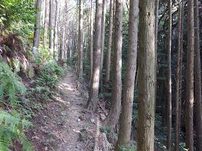 緑林帯を進む