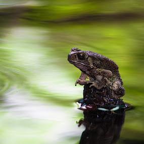 FROG by Suman Sengupta - Animals Other ( water, frog, raw shooter )