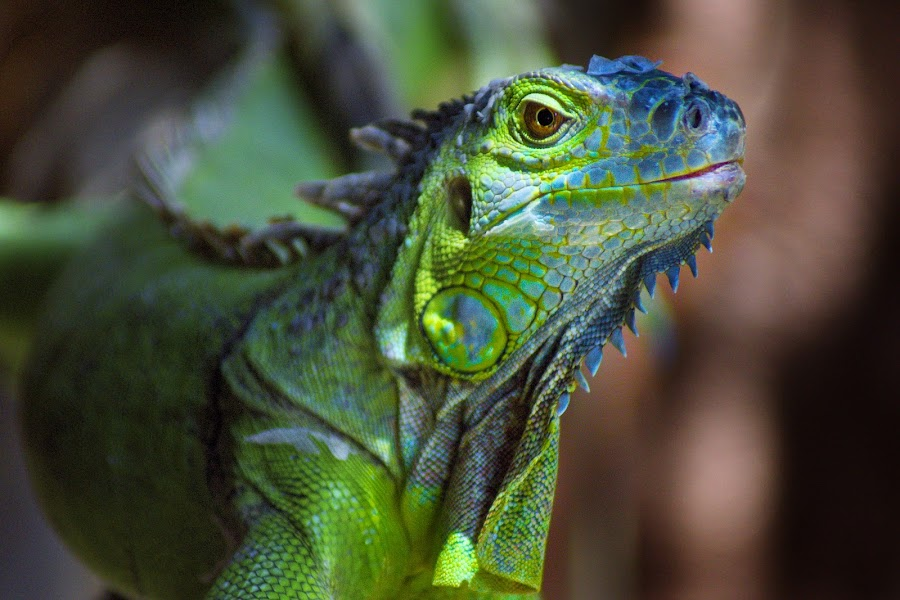 by James Green - Animals Reptiles