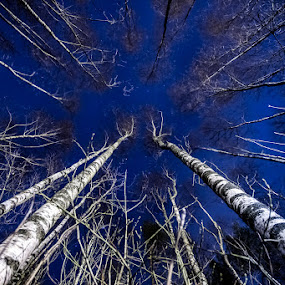 Up by Morten Pettersen - Nature Up Close Trees & Bushes ( sky, trees, night )