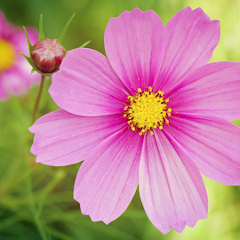 by Lori Rose - Flowers Flower Gardens