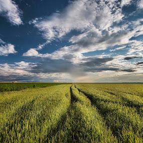 Trails by Kiril Krastev - Landscapes Prairies, Meadows & Fields ( clouds, wheat, field, sky, green, dramatic, trails )