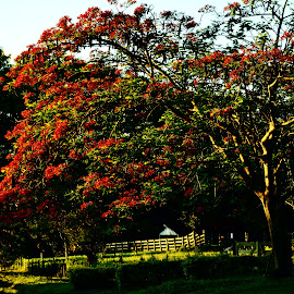 Bauru SP Brazil  by Marcello Toldi - Nature Up Close Trees & Bushes
