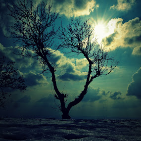 Snowy Tree  by Akash Deep - Landscapes Prairies, Meadows & Fields ( alone tree, tree, snow, kamrunaag, snow tree, dharamshala )