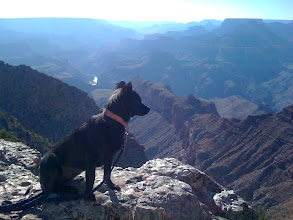 Photo: Malia at the Grand Canyon in Arizona