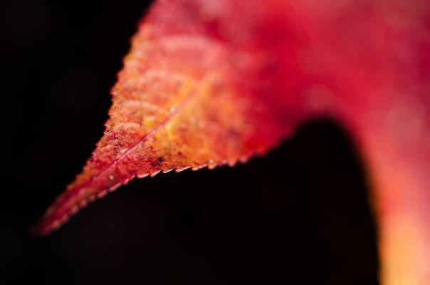 Caldi dettagli d'autunno di AliceB
